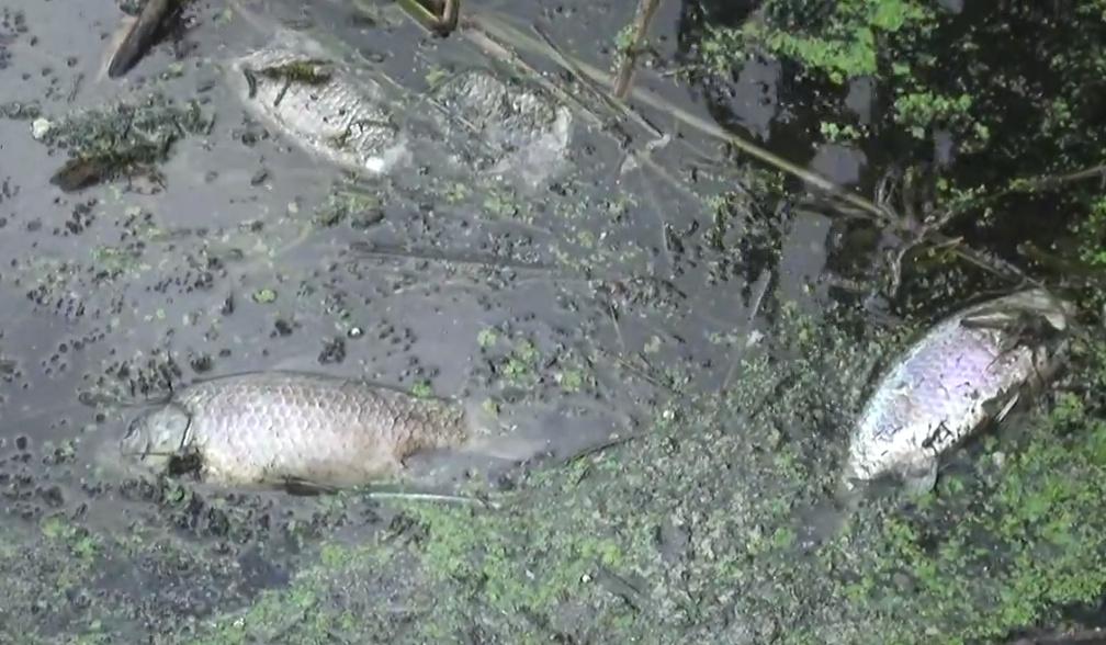 гибнет рыба